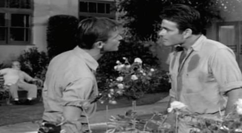 Dale and Martin argue garden